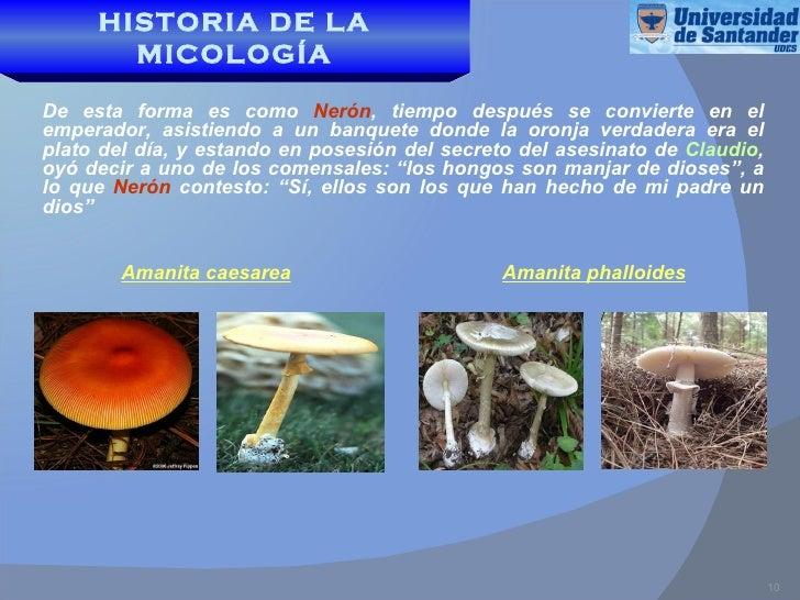 Historia de la micologia for Como se cocinan los hongos