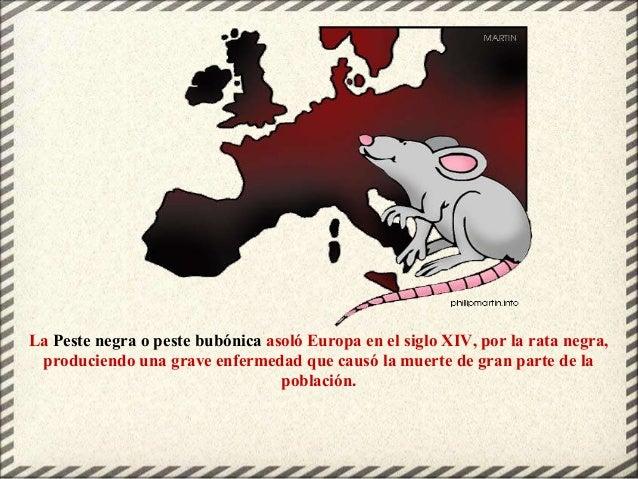 La Peste negra o peste bubónica asoló Europa en el siglo XIV, por la rata negra, produciendo una grave enfermedad que caus...