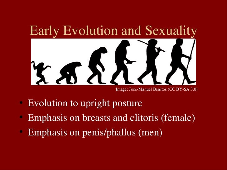 Evolution of human sexuality