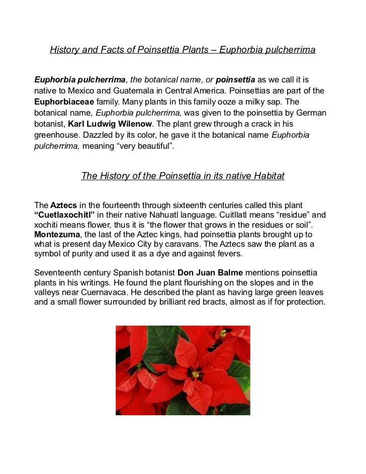 History and Facts of Poinsettia Plants – Euphorbia pulcherrimaEuphorbia pulcherrima, the botanical name, or poinsettia as ...