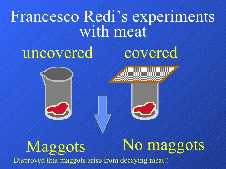 Francesco Redi's experiments with meat uncovered covered Maggots No maggots Disproved that maggots arise from decaying mea...