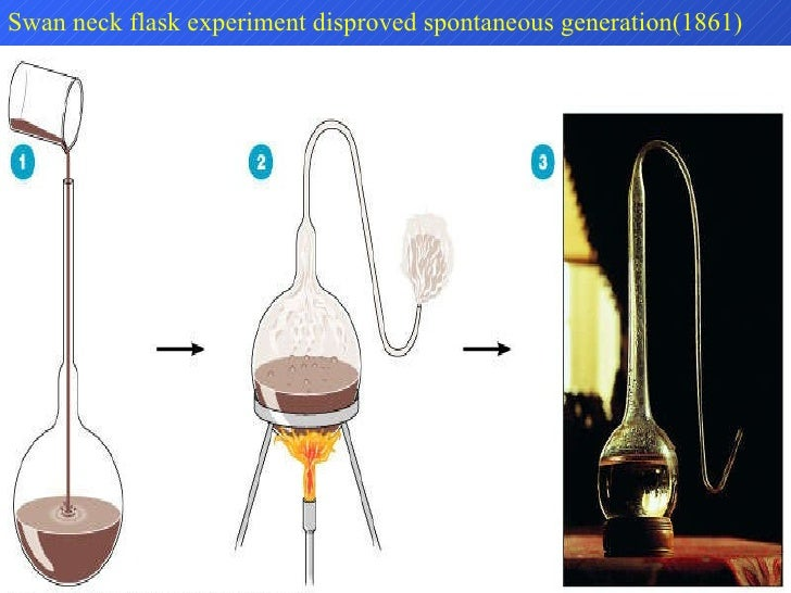 Swan neck flask experiment disproved spontaneous generation(1861)
