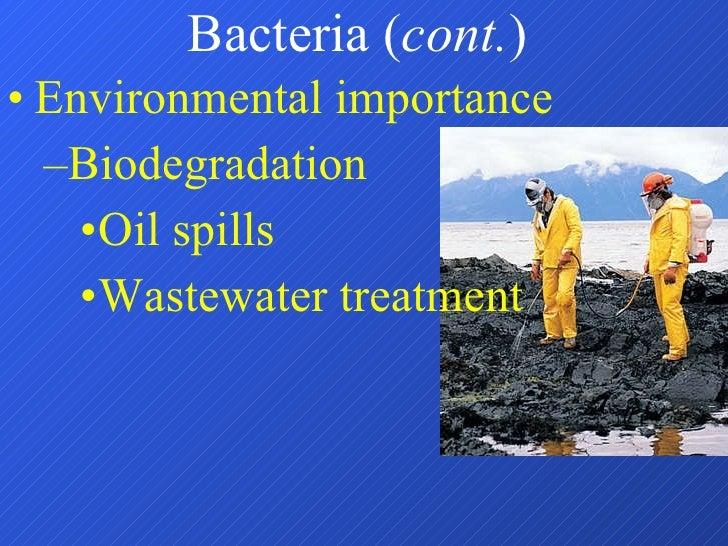 Bacteria ( cont. ) <ul><li>Environmental importance </li></ul><ul><ul><li>Biodegradation </li></ul></ul><ul><ul><ul><li>Oi...