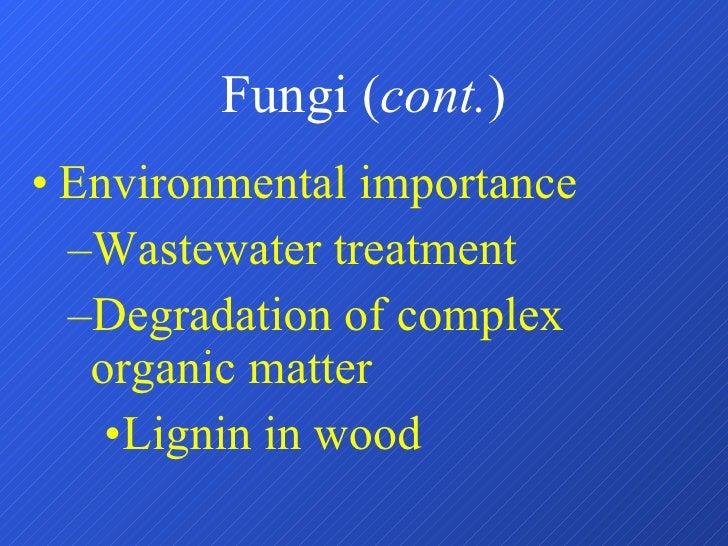Fungi ( cont. ) <ul><li>Environmental importance </li></ul><ul><ul><li>Wastewater treatment </li></ul></ul><ul><ul><li>Deg...