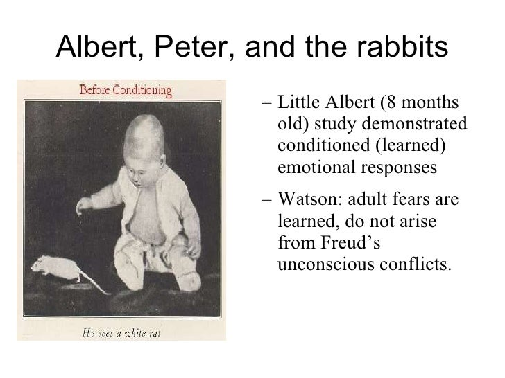 In the little albert experiment on conditioned emotional responses, the unconditioned stimulus was