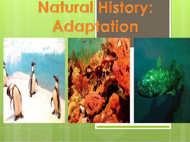 There are 3 types ofadaptation to theenvironment:                       Since the replacement of                       she...