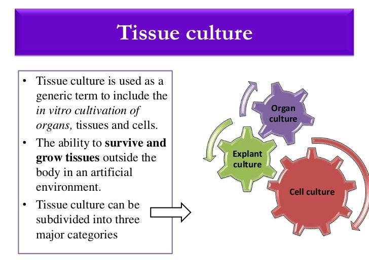 History of animal cell culture, cell final