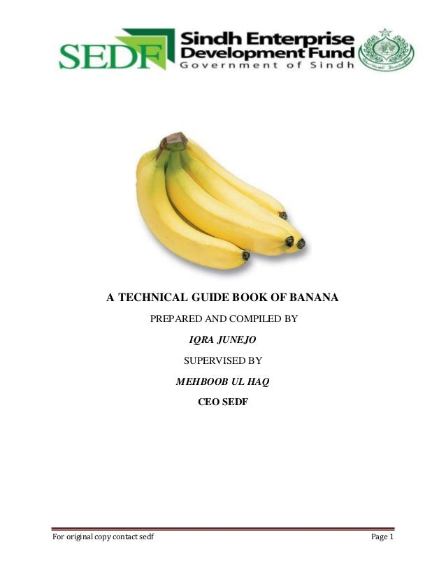 A TECHNICAL GUIDE BOOK OF BANANA PREPARED AND COMPILED BY IQRA JUNEJO SUPERVISED BY MEHBOOB UL HAQ CEO SEDF  For original ...