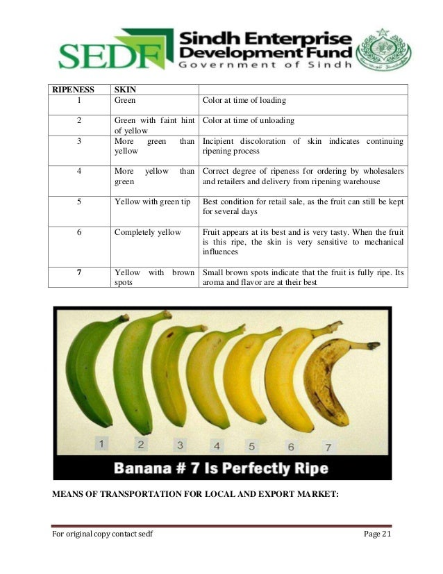 technical guide book of banana,sedf