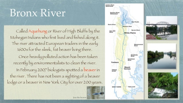 Bronx River  Called Aquehung or River of High Bluffs by the Mohegan Indians who first lived and fished along it. The river ...
