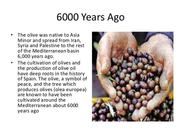 History Of Olive In World A Research Report By Mr Allah Dad Khan