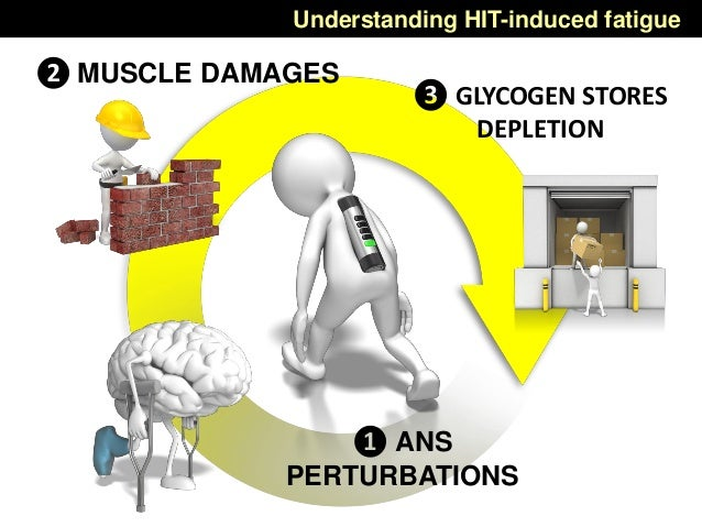 Understanding HIT-induced fatigue ❷ MUSCLE DAMAGES ❸ GLYCOGEN STORES DEPLETION ❶ ANS PERTURBATIONS