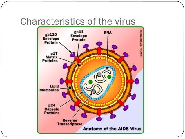 Human Immunodeficiency Virus