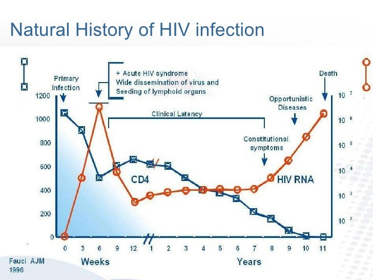 an introduction to the history of aids virus Learn about the history of hiv, aids,  and scientists learned more about the virus by 1995, complications from aids was the leading cause of death for adults 25.
