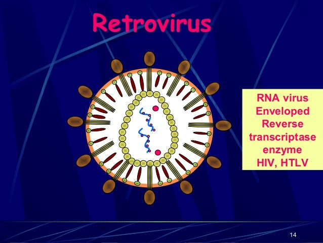 Retrovirus RNA virus Enveloped Reverse transcriptase enzyme HIV, HTLV  14