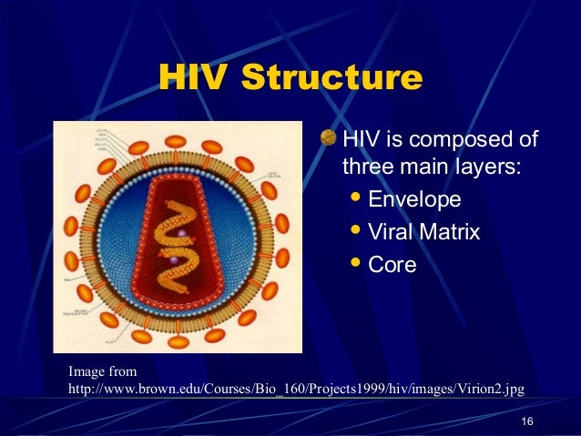HIV Structure HIV is composed of three main layers:  Envelope  Viral Matrix  Core  Image from http://www.brown.edu/Cour...