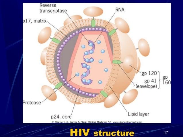 HIV  structure  17