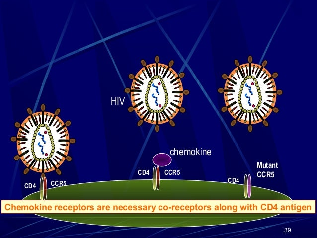 HIV  chemokine CD4 CD4  CCR5  CCR5  CD4  Mutant CCR5  macrophage Chemokine receptors are necessary co-receptors along with...