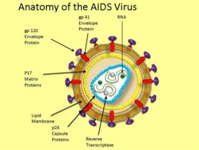 a history and structure of aids virus #1 – free virus #2 patients with history of ivda as mode of transmission fatigue microsoft powerpoint - hiv aids ppt.