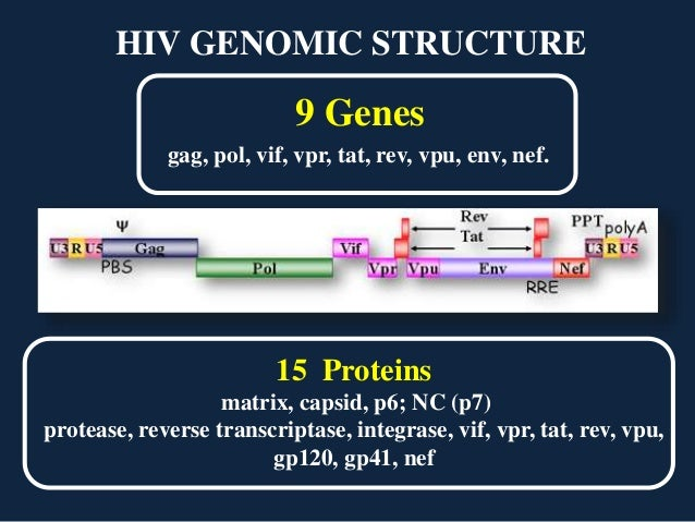 nef protein in hiv The nef protein can be detected in plasma of hiv-1-infected patients and plays a role in the pathogenesis of hiv-1 nef produced during the early stages of infection is fundamental in.