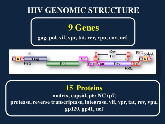 Nef protein in hiv