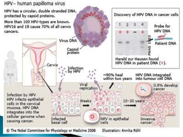 The discovery of hiv