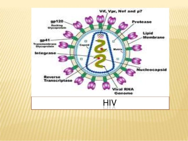 An Overview of Human Immunodeficiency Virus and AIDS