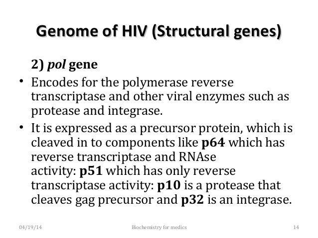 Genome of HIV (Structural genes)Genome of HIV (Structural genes) 3) envgene - determines the synthesis of envelop glycopr...