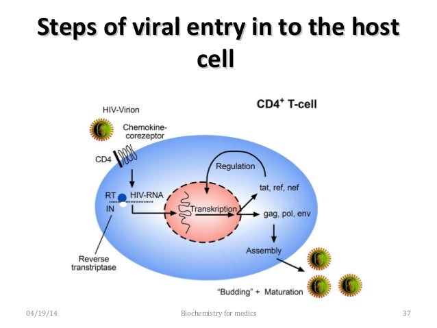 Steps of viral exit from host cellSteps of viral exit from host cell • Transcription back into RNA o The viral DNA is tran...