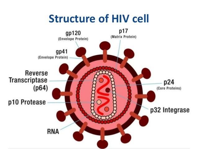 hiv cell diagram wiring diagram online HIV Cycle hiv \u0026 pregnancy hiv cycle hiv cell diagram