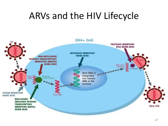 Nevirapine Hiv Pregnancy