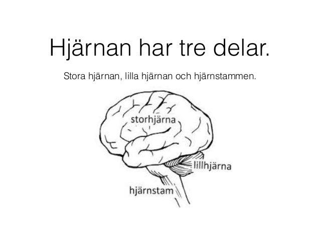 lilla hjärnans funktion