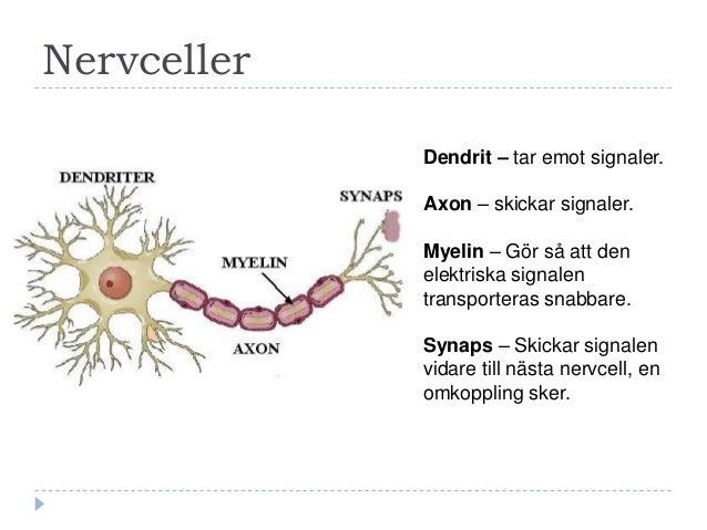 vad är axon