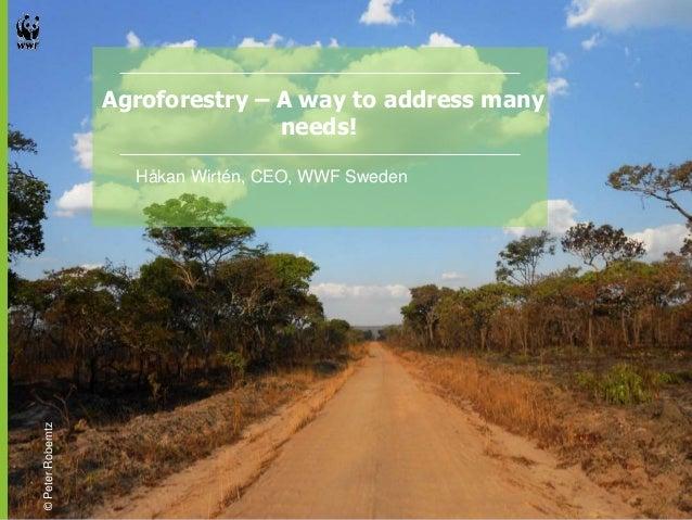 Agroforestry – A way to address many  needs!  Håkan Wirtén, CEO, WWF Sweden  © Peter Roberntz