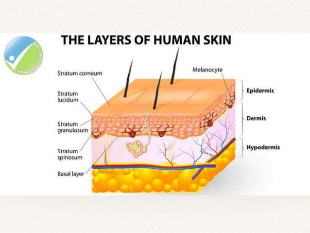 ❖ Benign Classification of skin tumours ❖ o Squamous cell carcinoma. o Basal cell carcinoma. o Melanoma. o Malignant skin ...