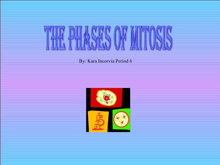 The Phases of Mitosis By: Kara Incorvia Period 6