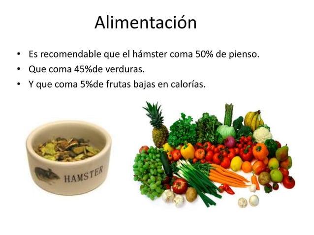 • Es recomendable que el hámster coma 50% de pienso. • Que coma 45%de verduras. • Y que coma 5%de frutas bajas en calorías...