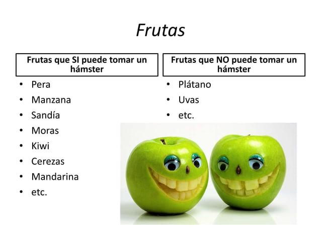 Frutas Frutas que SI puede tomar un hámster • Pera • Manzana • Sandía • Moras • Kiwi • Cerezas • Mandarina • etc. Frutas q...