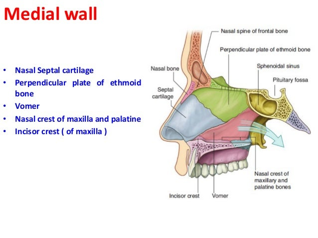 Floor Of The Nasal Cavity ...