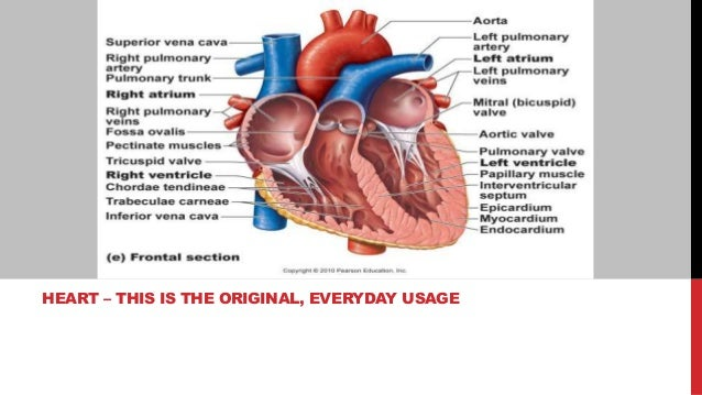 HEART – THIS IS THE ORIGINAL, EVERYDAY USAGE