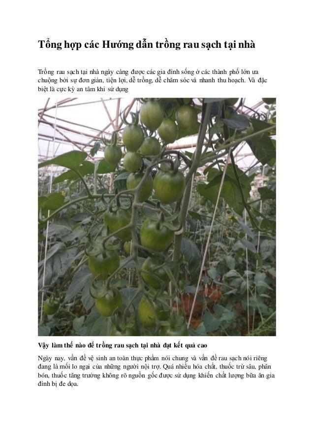 Tổng hợp các Hướng dẫn trồng rau sạch tại nhà Trồng rau sạch tại nhà ngày càng được các gia đình sống ở các thành phố lớn ...