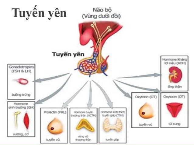 THÙY TRƯỚC  bài tiết Hormon phát triển cơ thể - GH (Human Growth Hormone) Hormon kích thích tuyến giáp – TSH (Thyroid S...
