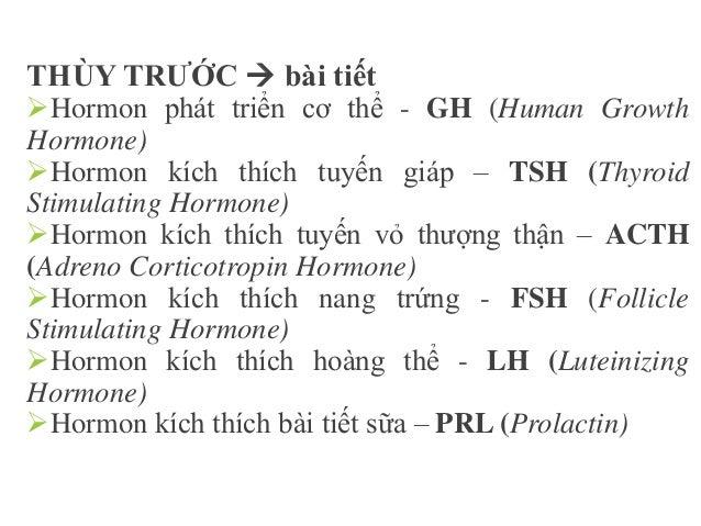 THÙY SAU  dự trữ Hormon chống bài niệu – ADH (Anti Diuretic Hormone) Oxytocin (co cơ tử cung, bài xuất sữa)