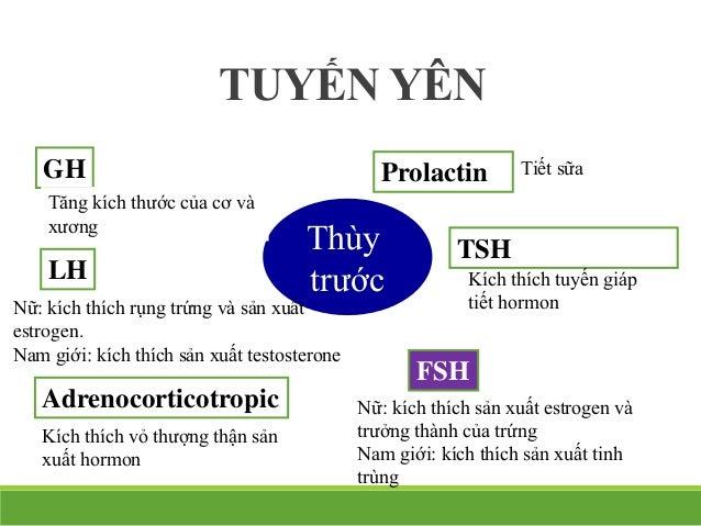 34-18 Thùy sau Antidiuretic hormone (ADH) Oxytocin Kích thích thận hạn chế tiết nước Nữ: gây co thắt của tử cung và tăng ...