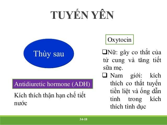 Thùy trước  Tiết ra 6 hormon: GH, ACTH, TSH, P, FSH, LH.  Kiểm soát chức năng chuyển hóa toàn cơ thể.