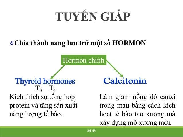 TUYẾN GIÁP Tuyến giáp tiết ra ba hormon: Triiodothyronin (T3), chiếm 7% lượng hormone giáp. Tác dụng mạnh hơn T4 gấp 4 lầ...
