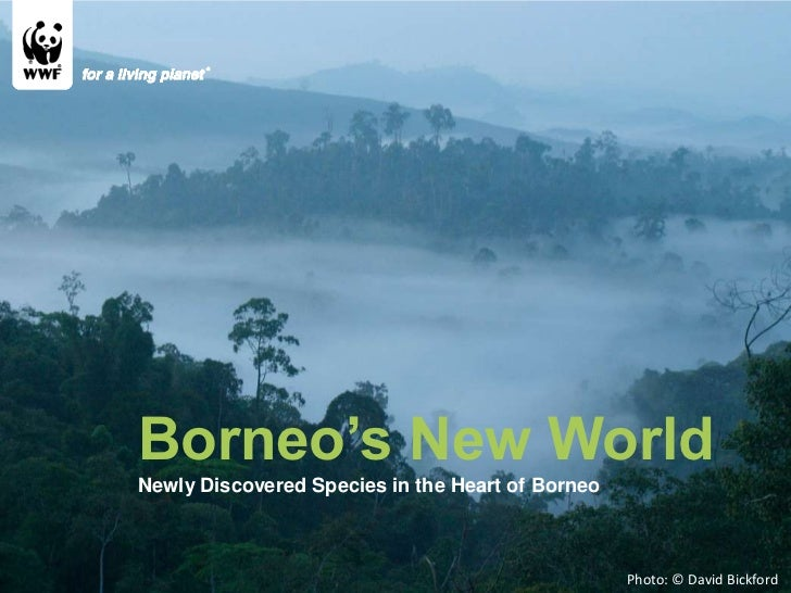 Photo: © David Bickford  Borneo's New World Newly Discovered Species in the Heart of Borneo