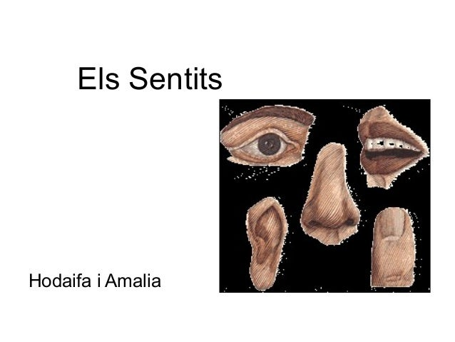Els SentitsHodaifa i Amalia