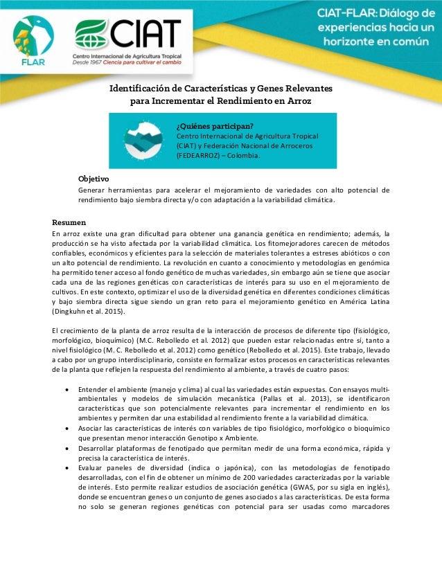 Identificación de Características y Genes Relevantes para Incrementar el Rendimiento en Arroz    Objetivo Genera...