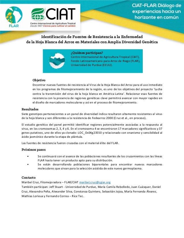 Identificación de Fuentes de Resistencia a la Enfermedad de la Hoja Blanca del Arroz en Materiales con Amplia Diver...